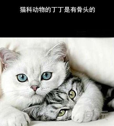 十万个冷知识:猫科动物的丁丁是有骨头的(2)