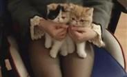 轩子ASMR 胶带滑翔机剪纸板撸猫