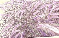 咬人画的-公园里种的紫叶狼尾草也正值成熟